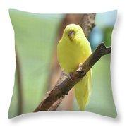 Gorgeous Little Yellow Parakeet Living In The Wild Throw Pillow