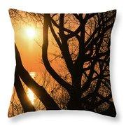 Gorgeous Morning Through The Tree Screen Throw Pillow