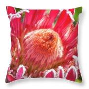 Gorgeous Pink Protea Bloom  Throw Pillow