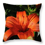 Gorgeous Pretty Orange Lily Flower Blooming In A Garden Throw Pillow