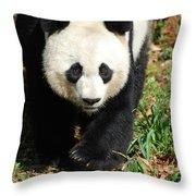 Gorgeous Sweet Giant Panda Bear Ambling Along Throw Pillow