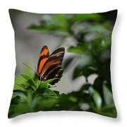 Gorgeous View Of An Oak Tiger Butterfly In The Spring Throw Pillow
