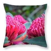 Gorgeous Waratah -floral Emblem Of New South Wales Throw Pillow