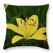 Gorgeous Yellow Lily Growing In Nature Up Close Throw Pillow