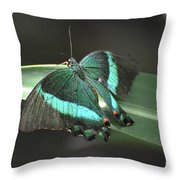Gorgoeus Close Up Of This Emerald Swallowtail Butterfly  Throw Pillow