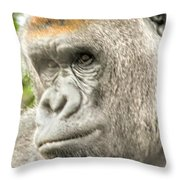 Gorilla - Como Zoo, St. Paul, Minnesota Throw Pillow