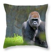 Gorilla Stare Throw Pillow