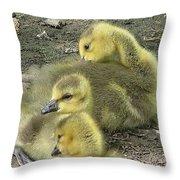 Gosling Trio Throw Pillow
