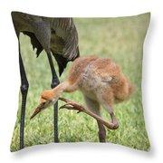 Sandhill Scratch Throw Pillow