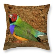 Gouldian Finch Throw Pillow