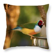 Gouldian Finche Throw Pillow