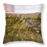 Governor's Palace Bluebird Throw Pillow