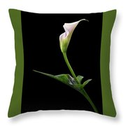 Graceful Curve Throw Pillow