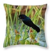 Grackle Hiding In Marsh Throw Pillow