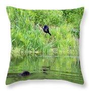 Grackle Meets Beaver Throw Pillow