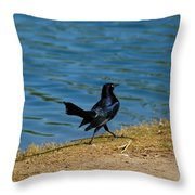 Grackle On The Move Throw Pillow