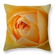 Graham Thomas Old Fashioned Rose Throw Pillow by Jocelyn Friis