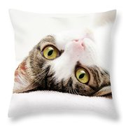 Grand Kitty Cuteness Throw Pillow by Andee Design