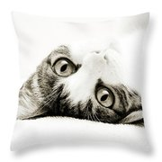 Grand Kitty Cuteness Bw Throw Pillow by Andee Design