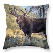 Grand Teton Moose Throw Pillow