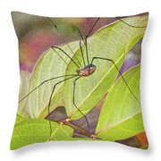 Grandaddy Long Legs Throw Pillow