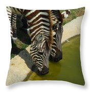 Grants Zebras - Thirst Quencher Throw Pillow
