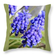 Grape Hyacinth Closeup Throw Pillow