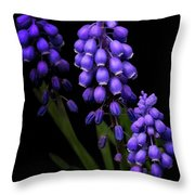 Grape Hyacinths Throw Pillow