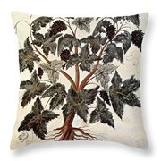 Grapevine, 1229 Throw Pillow