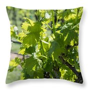 Grapevine In Early Spring Throw Pillow