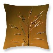 Grass During Sun Set Throw Pillow