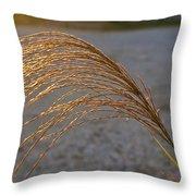 Grassflowers In The Setting Sun Throw Pillow by Douglas Barnett