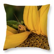Grasshopper In Sunflower Throw Pillow