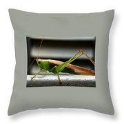 Grasshopper Posing Throw Pillow