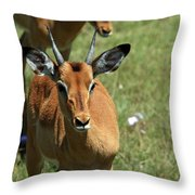 Grassland Deer Throw Pillow