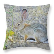 Grassland Youngster Throw Pillow