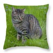 Gray Cat In Vivid Green Grass Throw Pillow