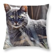 Gray Cat In Woods Throw Pillow