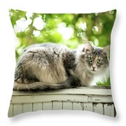 Gray Cat Sitting On A Balcony Throw Pillow