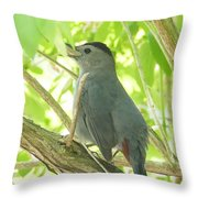 Gray Catbird Throw Pillow