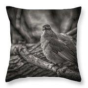 Gray Catbird Throw Pillow