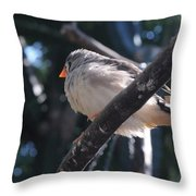 Gray Crowned Rosy Finch   Throw Pillow