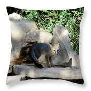 Gray Fox 4 Throw Pillow
