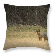 Gray Fox In Lower Pasture Throw Pillow