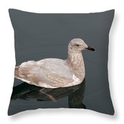 Gray Gull Reflection Throw Pillow