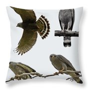 Gray Hawk Collage Throw Pillow