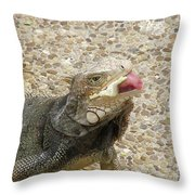 Gray Iguana Eating Lettuce With His Pink Tongue Sticking Out Throw Pillow