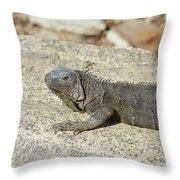 Gray Iguana Sunning And Resting On A Large Rock Throw Pillow