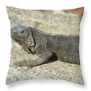 Gray Iguana With Long Talons Sitting On A Rock Throw Pillow