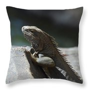 Gray Iguana With Spines Along His Back On A Rock Throw Pillow